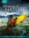 Documentary  /  Bbc DVD Elements Of Nature